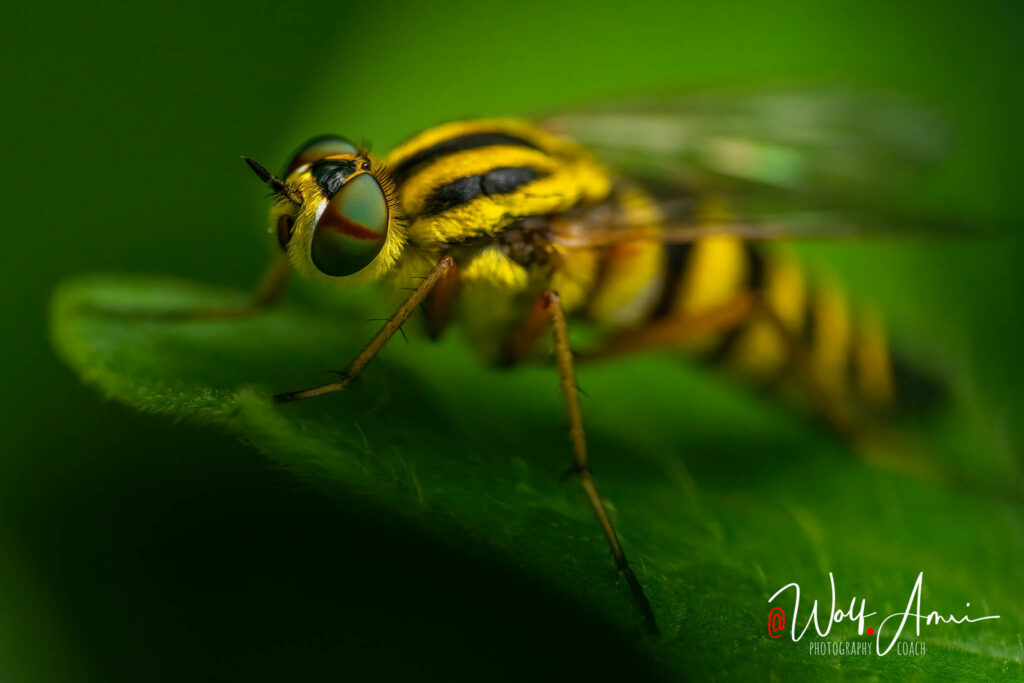 macro insect - which shutter speed to use?