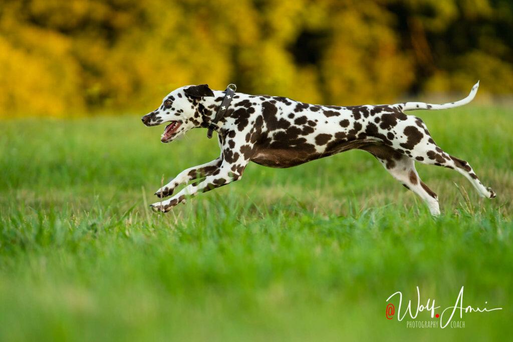 running dog shutter speed 1/1250sec