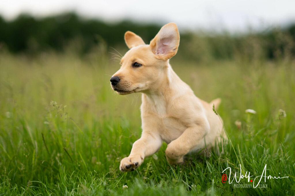 dog puppy shutter speed