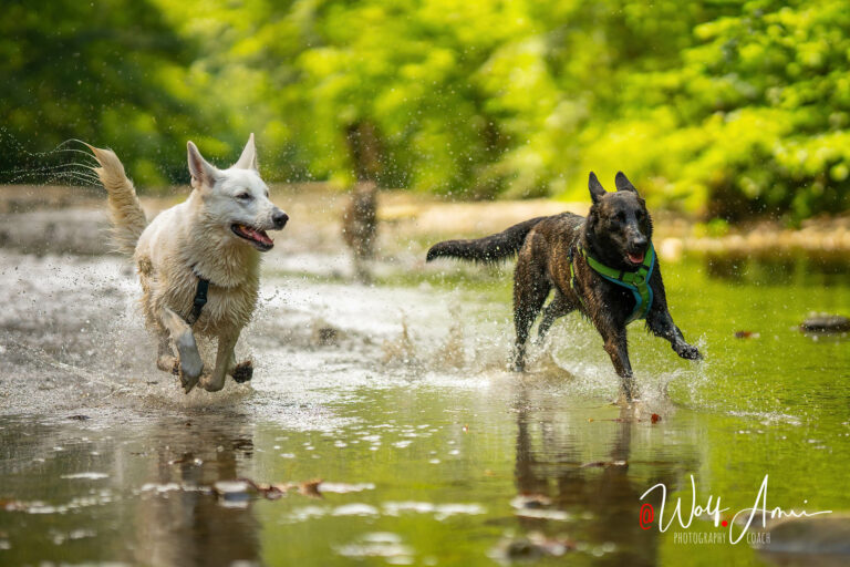 running dogs in water