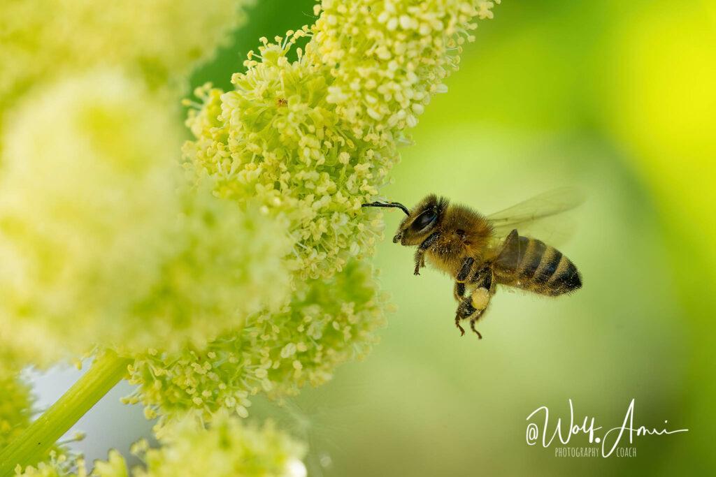 shutter speed for bees in flight