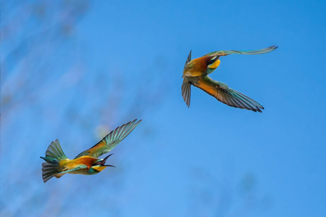 fast-shutter-speed-bird-photography